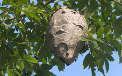 4 Effective Tips to Keep Wasps Away from a Home