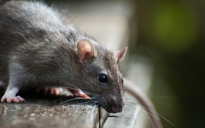 3 Reasons To Opt For Humane Or Organic Pest Control