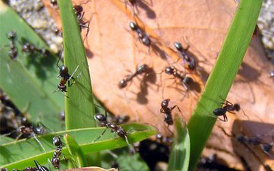 3 Interesting Facts About Ants You May Never Know